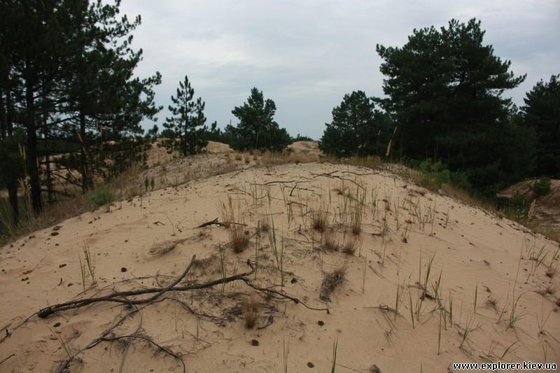 Лес опаясывающий пустыню