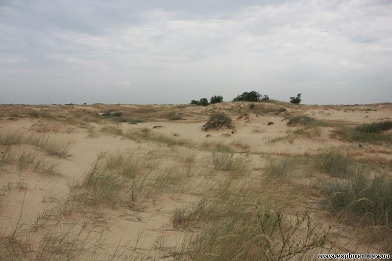Трава растущая в пустыне