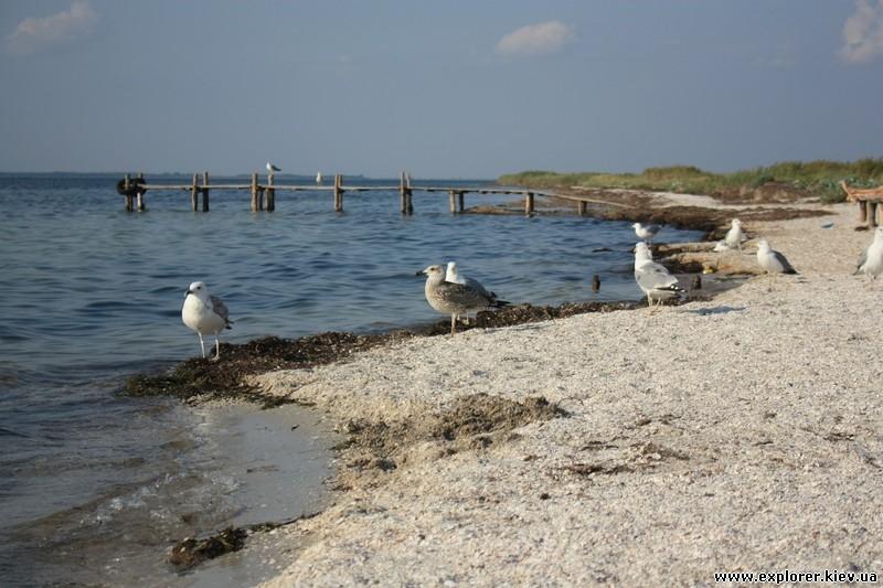 Чайки у берега