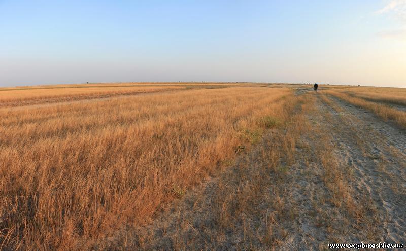 Дорога вдоль поля
